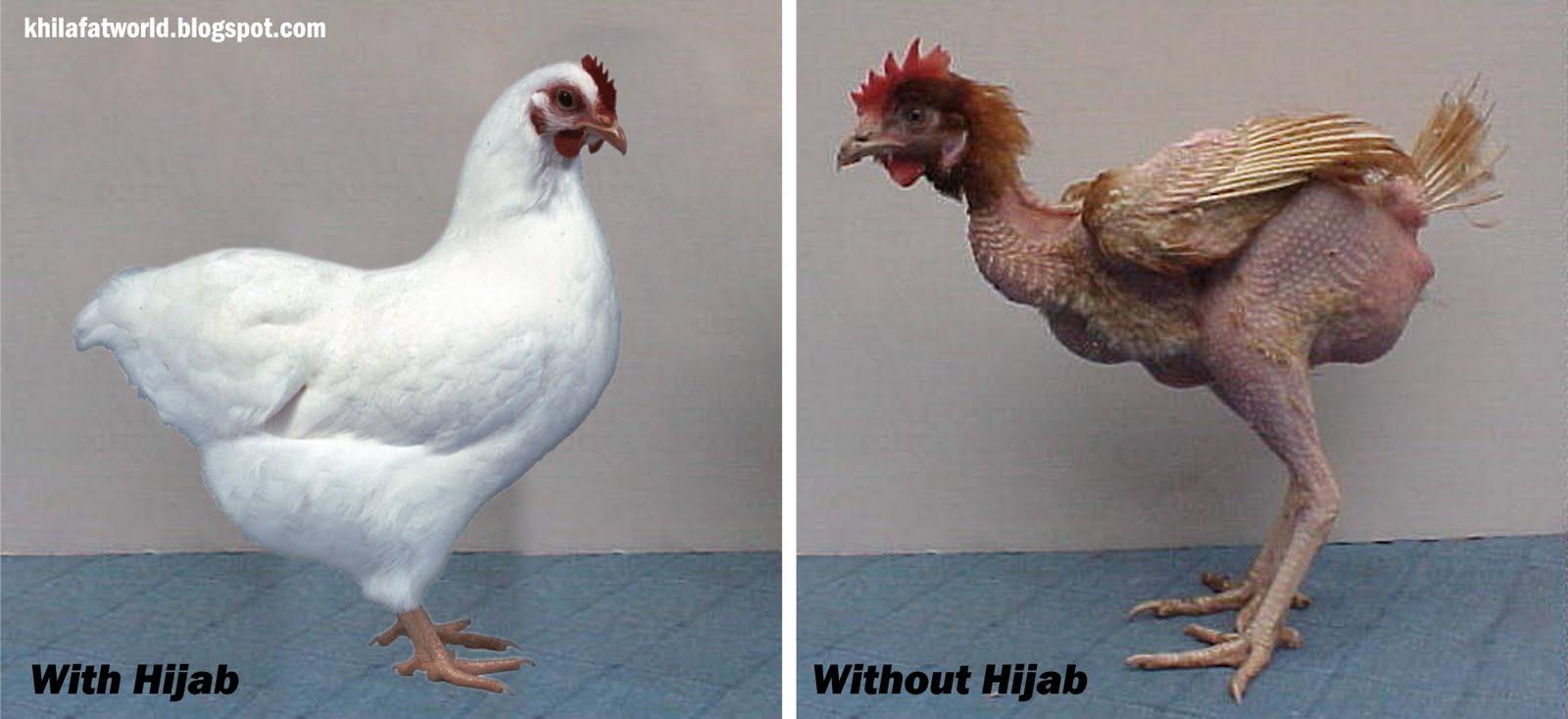 اضغط على الصورة لعرض أكبر.  الإسم:with_Hijab_&_without_Hijab.JPG مشاهدات:26976 الحجم:90.5 كيلوبايت الهوية:12195