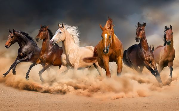 Name:  horses.jpg Views: 39 Size:  38.6 KB