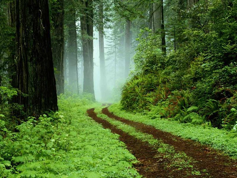 اضغط على الصورة لعرض أكبر.  الإسم:Forest.jpg مشاهدات:75 الحجم:545.0 كيلوبايت الهوية:6153